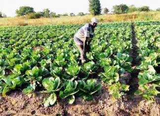 Mr Aboubaka Iddrisu in his carbage farm