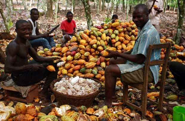 Release seed funds to cocoa LBCs within two days – NDC to govt